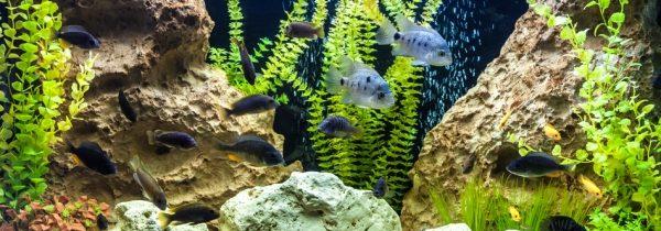 Советы для начинающих аквариумистов: основное, что нужно знать