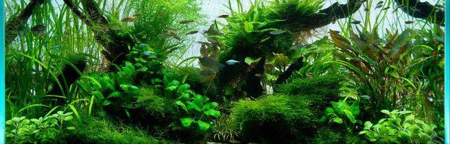 pH в аквариуме или один из самых важных показателей воды