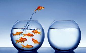 Почему умирают рыбки в аквариуме ?