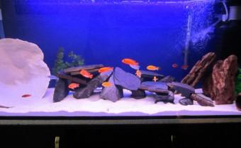 Кварцевый песок — отличный грунт для аквариума