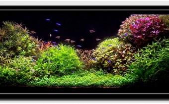 Содержание аквариумных растений: полезные советы