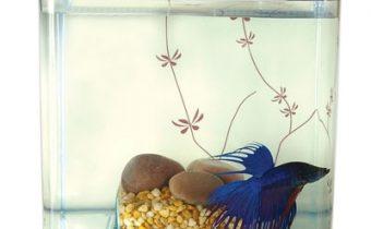 Почему петушок не ест и выплевывает корм