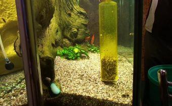Частота сифонки грунта в аквариуме