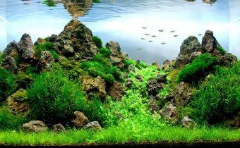 3 самых важных фактора роста аквариумных растений