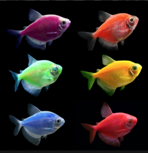 Цветные тернеции